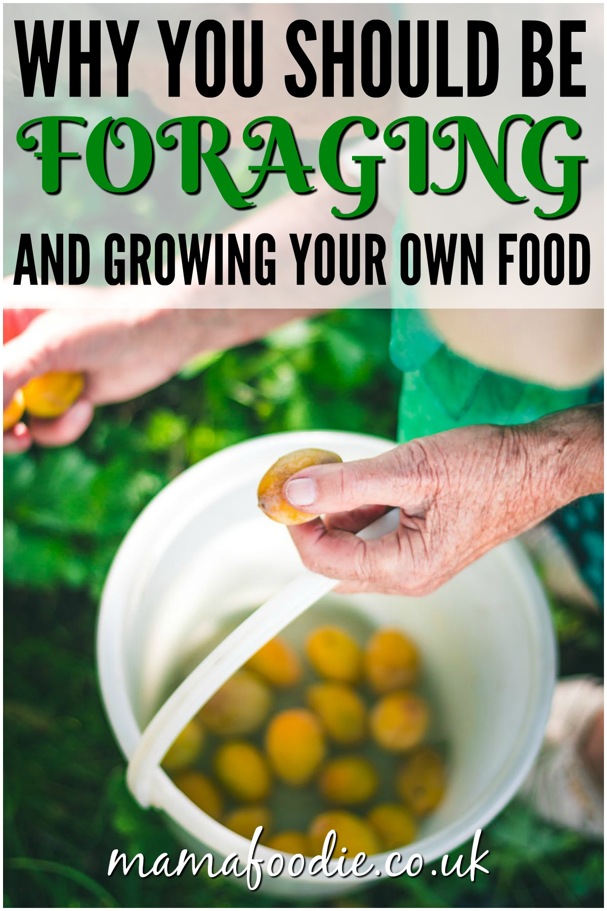 Why You Should be Foraging & Growing Your Own Food